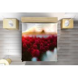 Шалте Лалета - Tulips